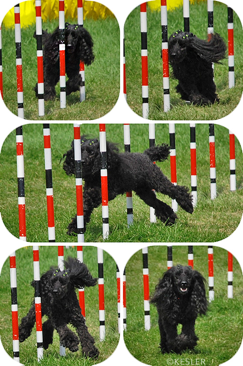 Nationals Agility Team Spotlight: </br>Tracey Mallinson and Abies