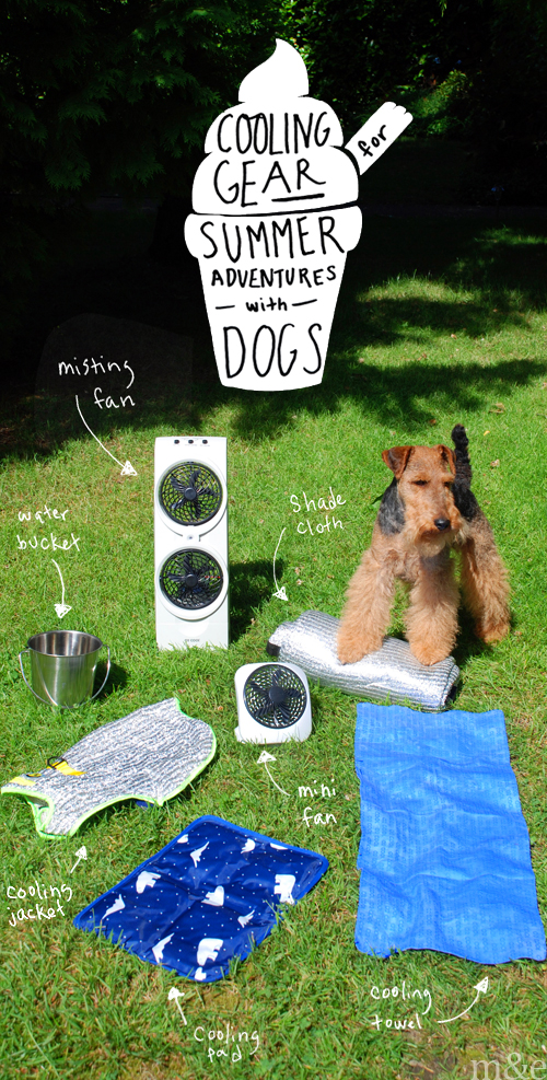 Cooling Gear for Summer Adventures with Dogs
