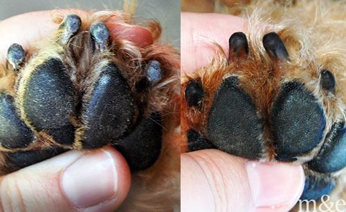 How to Dremel Dog Nails