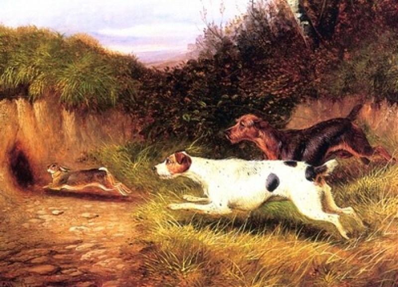 Terrier Type