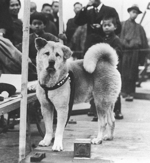 Hachikō 忠犬ハチ公: A Story of Loyalty, Loss, and Finally, a Happy Ending