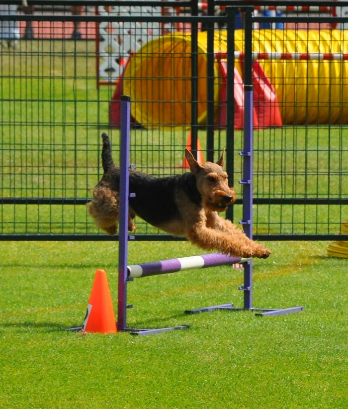 Agility Nationals!
