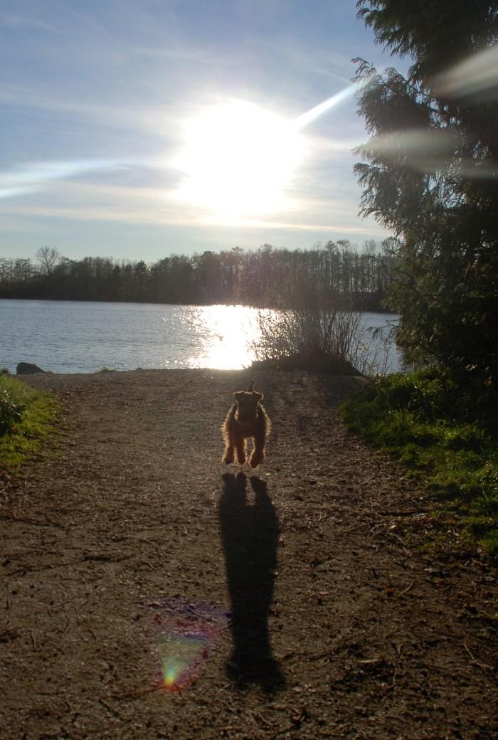 Impromptu Winter Walk