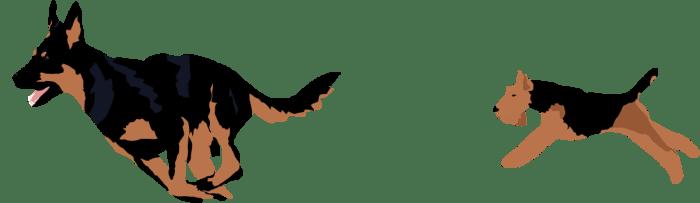 kelpie-welshie