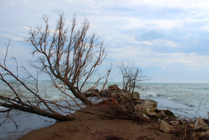 Point Pelee National Park: </br><i>The Tip</i>