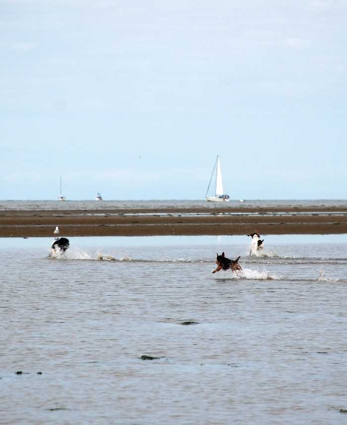 Sunday Morning at Low Tide