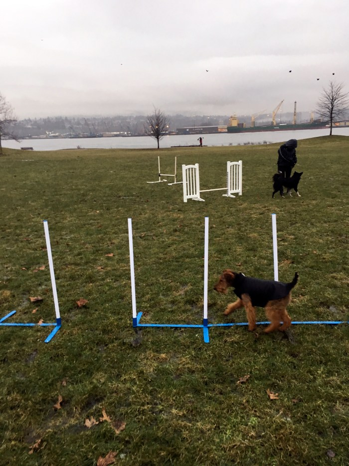 "Cold Weather Agility ""Practice"""