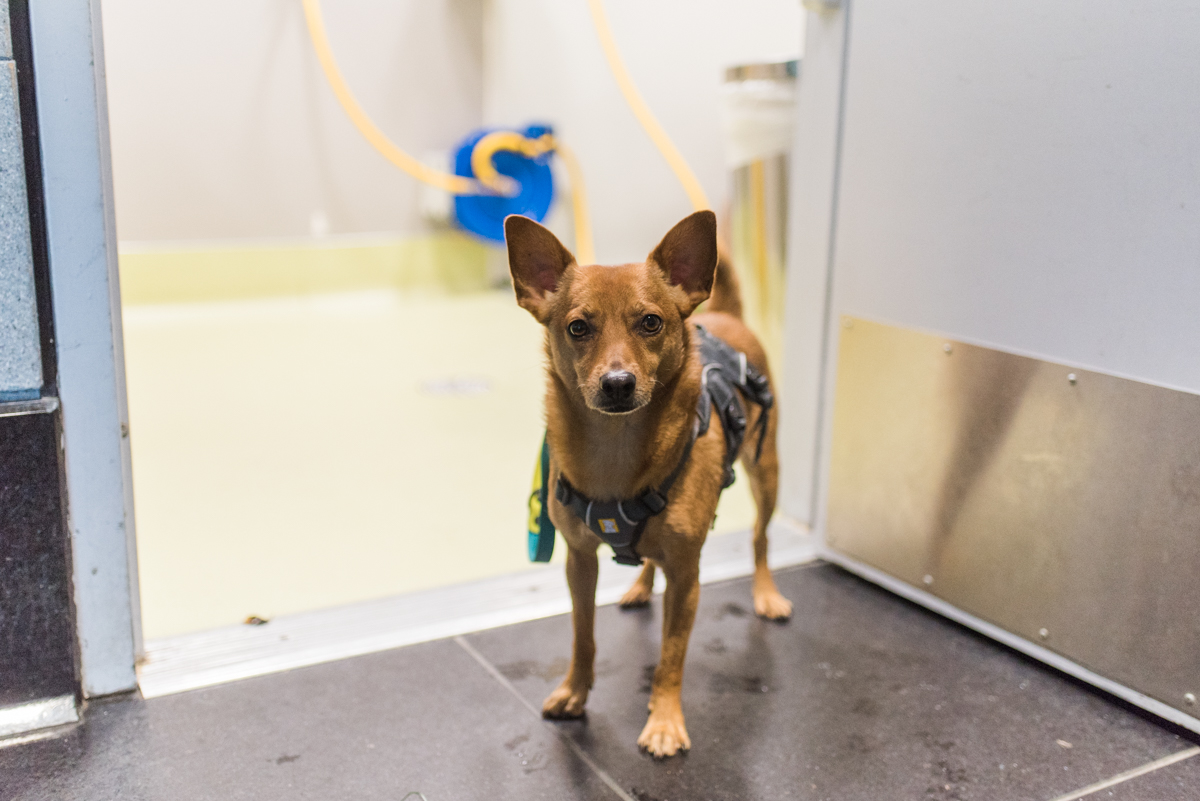 Airport Pet Relief Areas