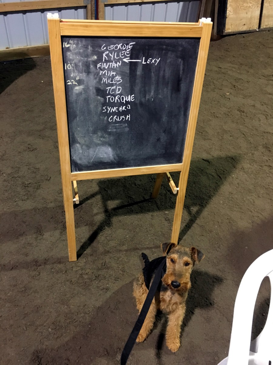 Agility Seminars with a Welsh Terrier