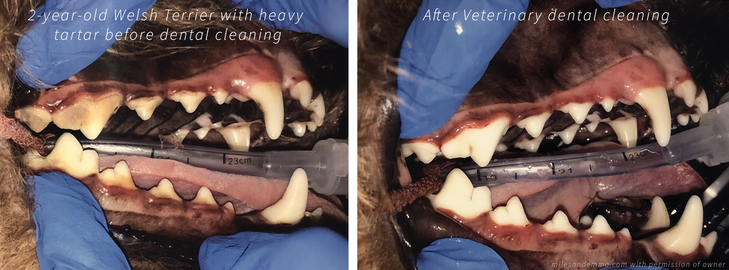 Does my dog need a dental cleaning at the vet?