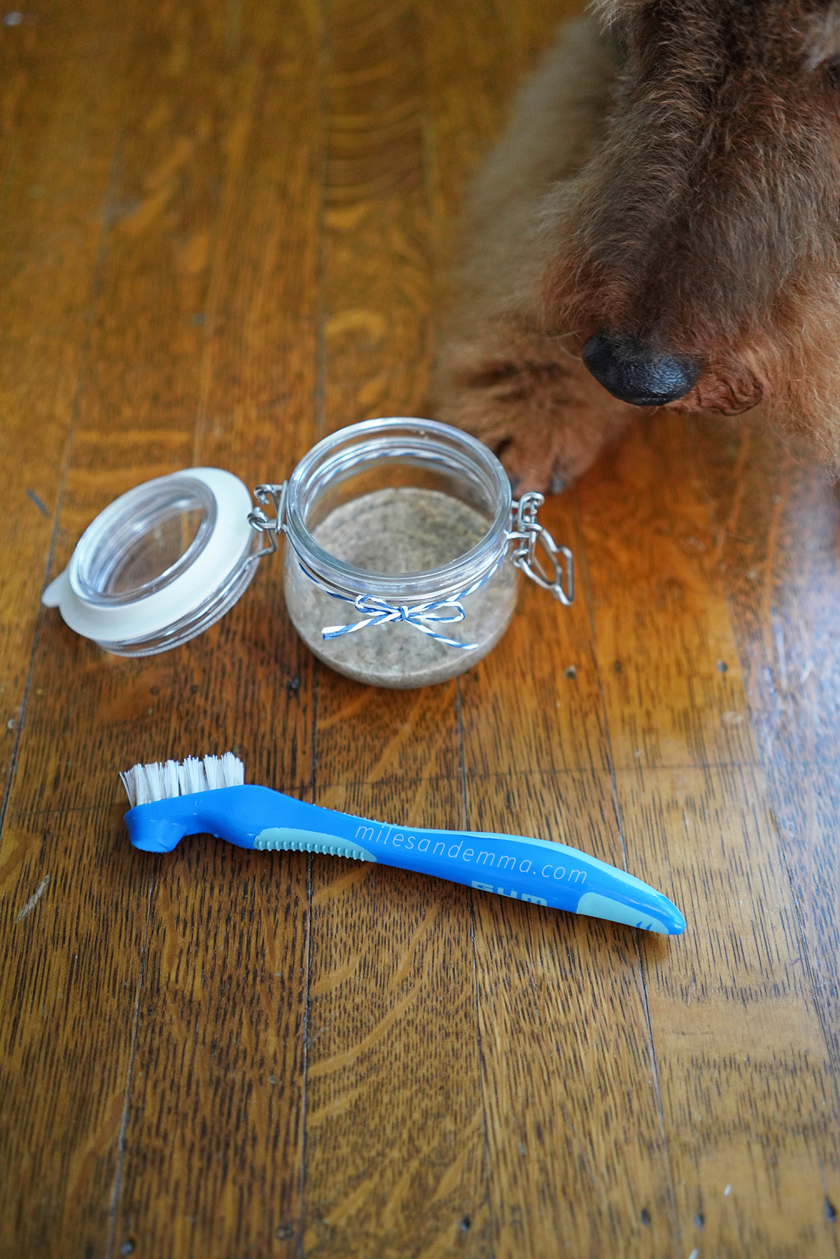 How to Brush Your Dog's Teeth + Make Your Own Dog Toothpaste