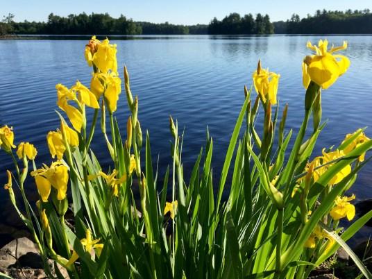 Wisconsin Invasive Species