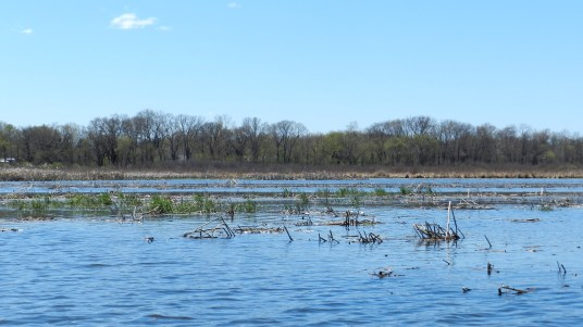 Cool washed-out section of wetlands just before the takeout.