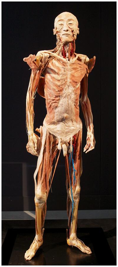 Mardi c'est anatomie (1/4)