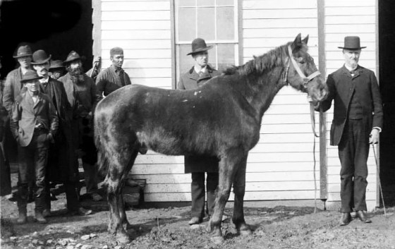 Many Americans just couldn't bear to part with Little Sorrel, Stonewall Jackson's horse. After the animal died, in 1886, his owners had him taxidermied.