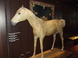 Le Vizir, the horse Napoleon took with him into exile. It's a museum piece in Paris.