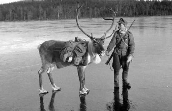 Dashing Through the Snow – The Unbelievable Reindeer Corps of World War Two