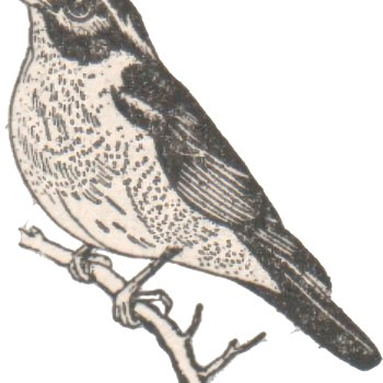 Drawing of a bird on a branch