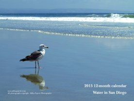 2015 water in San Diego calendar - front cover