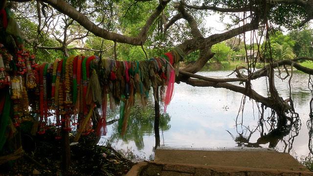 Sai-Ngam-Phimai-Nakhon-Ratchasima-Thailand