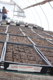 Trays of seeded soil blocks