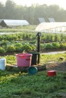 harvesting day at dawn