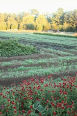 fall farm tapestry