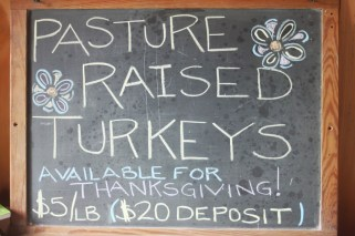 get your turkeys!