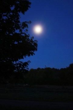moonlit tree silhouette