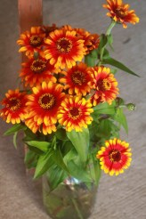 sunset zinnias