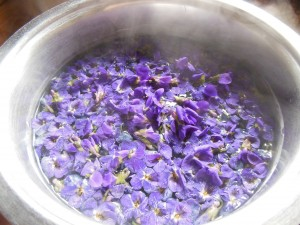 viole in infuso