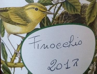 Finocchio selvatico Foeniculum vulgare da meditazione