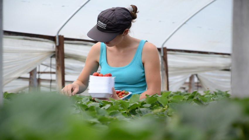 Hasta el 15 de octubre se amplia el plazo para presentar licencia de obra en los planes de mejora incorporación de jovenes y pequeñas explotaciones.1920