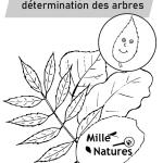 Page de garde de la clé de détermination des arbres et arbustes