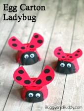 ladybugsheader