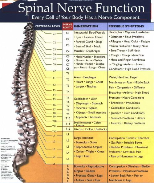 small resolution of spinalnervechart