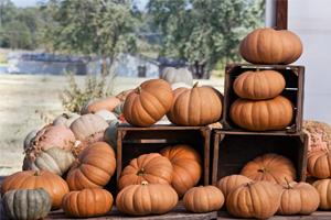 How to Cook a Pumpkin