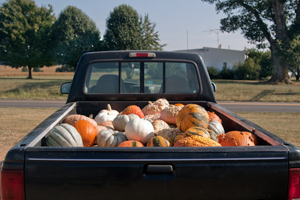 Pickup full of pumpkins
