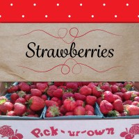 strawberries-inThePatch