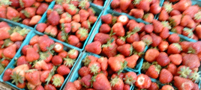 Strawberries!  Pre-picked only! Patch to open soon!