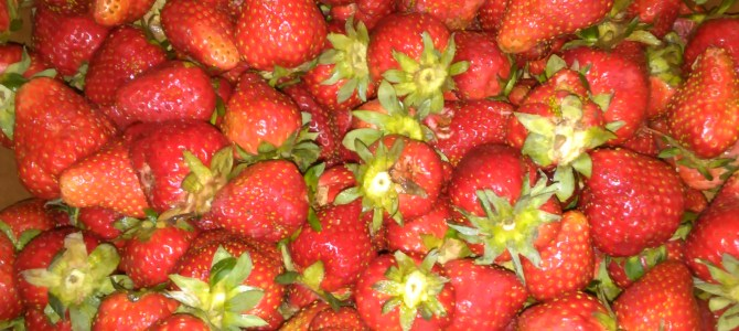 #freshpickedstrawberries and CSA's begin