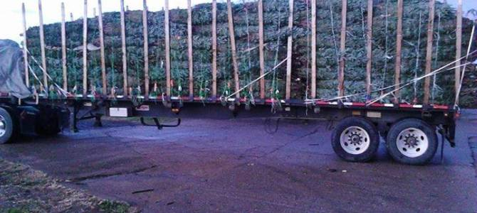 Christmas Trees will arrive Monday Nov 19!