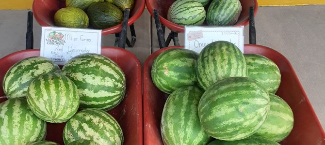 Watermelons, Honey Dew, Canary, and Spanish Melons