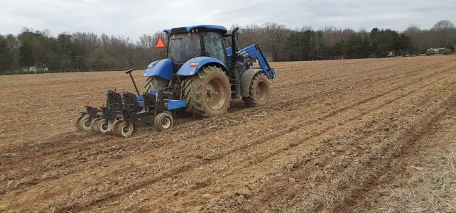 Busy week this week!  Strawberry Patch gets uncovered.  Preparing to plant Sweet Corn!