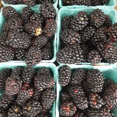 Blueberries and Blackberries….pre-picked only.  Plenty of BROCCOLI.  Peaches soon!