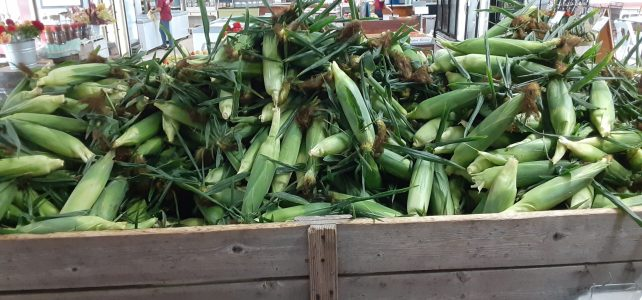 Corn Maze opens today!  Sweet Corn, Apples, Peaches, Tomatoes, Winter Squash, Peppers, Pumpkins and more!
