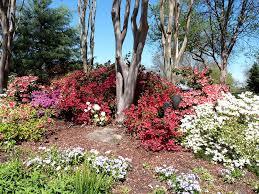 florida camelia and azaleas - millerstreecare.com