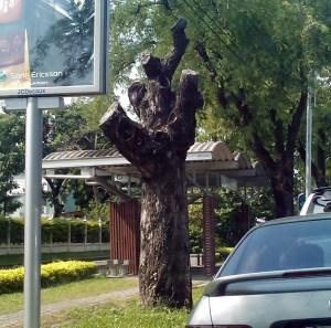 Bad tree trimming - Prepare your yard for hurricane season