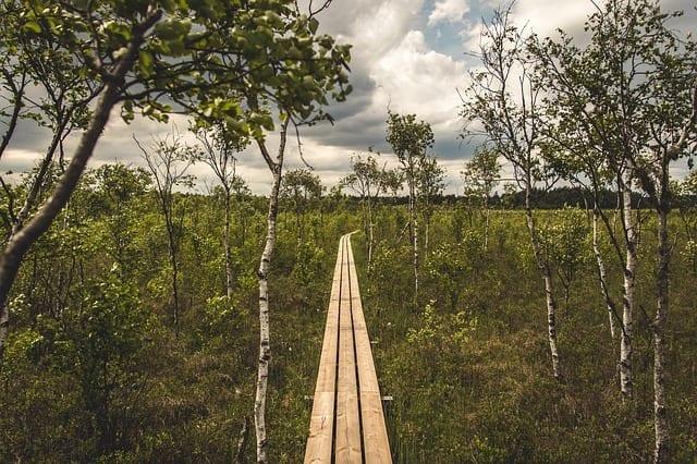 Brooksville Nature Hike