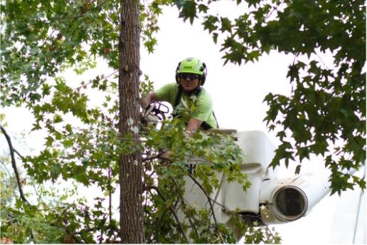 worker in tree